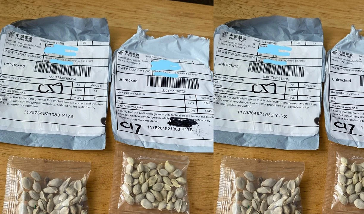 Mystery Seeds Scam From China  Chinese Packages